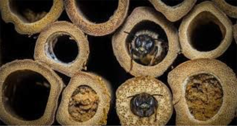 Bee Houses - Close up of bees using the houses