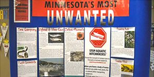 Minnesota's Most Unwated Aquatic Hitchighers poster - Traveling Library